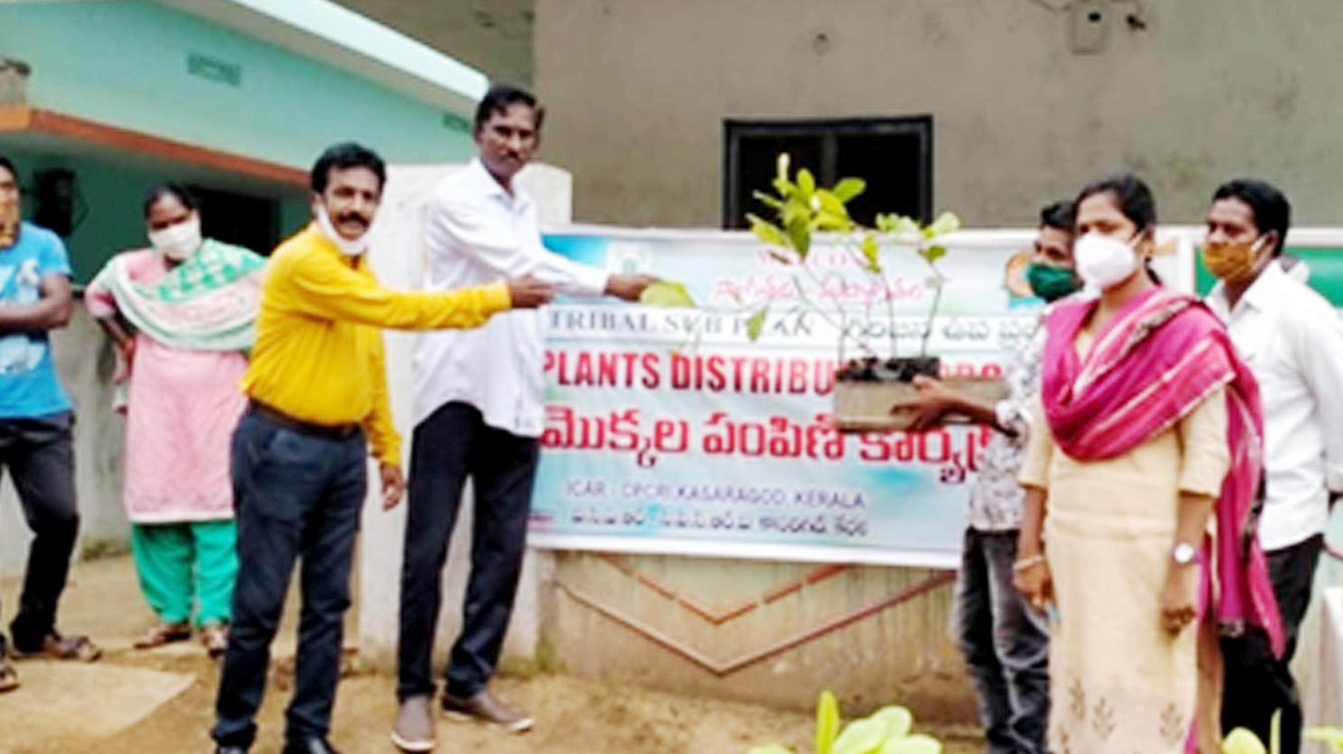 Photo for Cashew grafts distributed